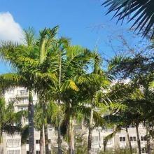 Midtown,Miami, Florida, USA