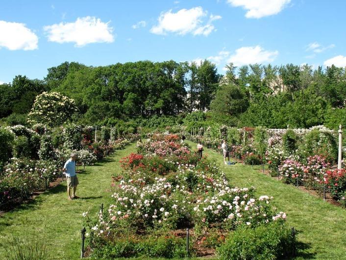 Brooklyn botanic garden for Koi garden rio di pusteria