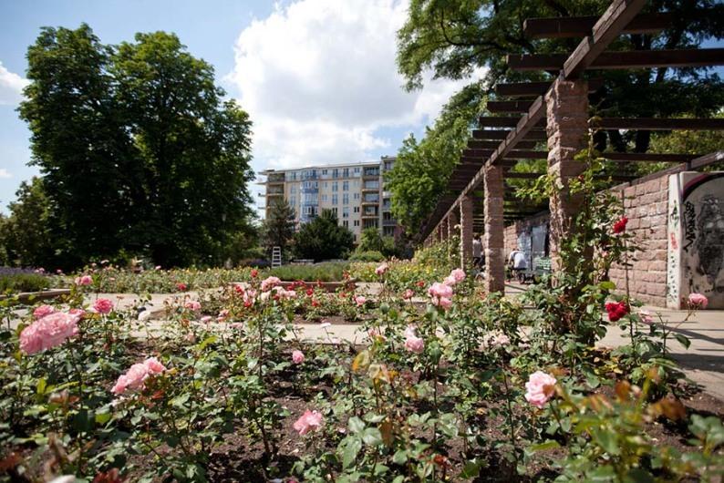 Rosengarten im Weinbergspark