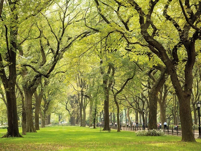 Central Park (NYC)