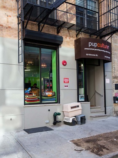 Pupculture New York