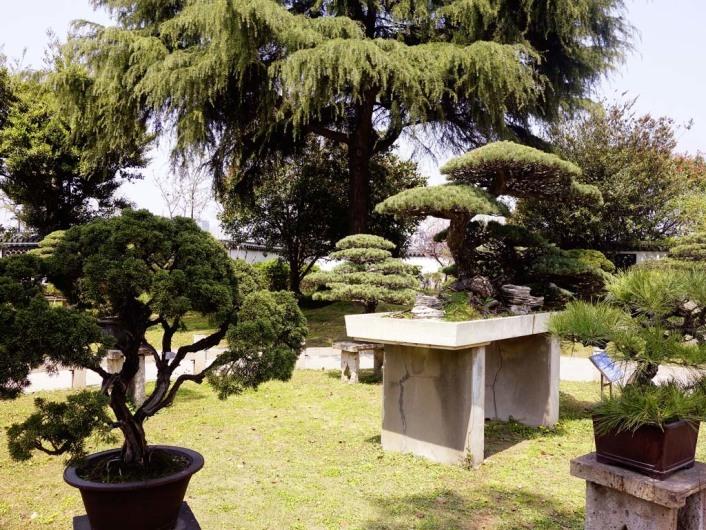 Shanghai Botanical Garden 上海植物园