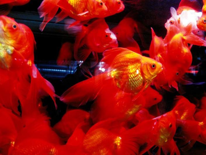 Wan Shang Flower and Bird Market 万商花鸟市场