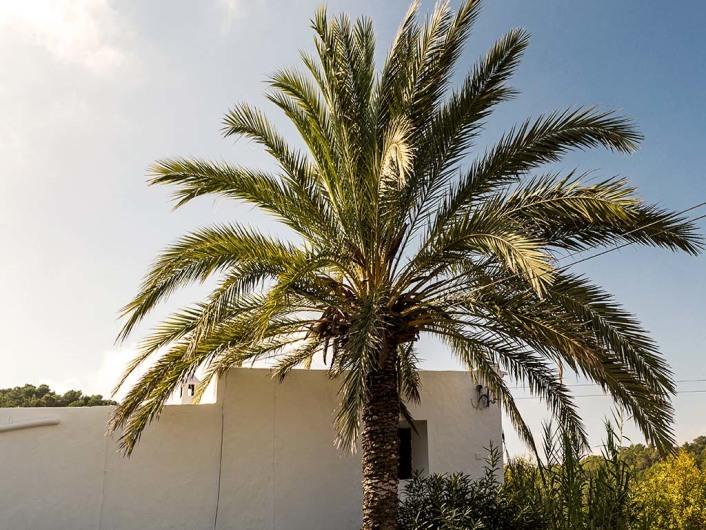 Yogazentrum Ibiza